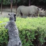 Aerin watching the rhinoceros.