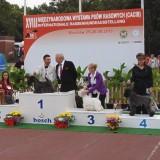 Aerin Princess Safirit - IDS Wroclaw - BIG 4