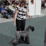 Aerin Princess Safirit - IDS Bratislava - Nomination for Cruft´s 2012, CACIB, CAC, V1