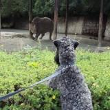Aerin zaujatě pozoruje nosorožce :)